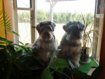 出窓で二人