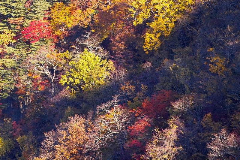 秋彩の流れ