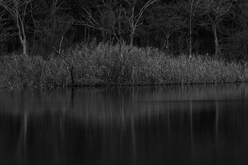 晩秋の水面