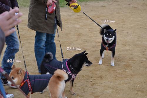2011+12+04_柴祭り~ぷらすわん~_0028_convert_20111205213228