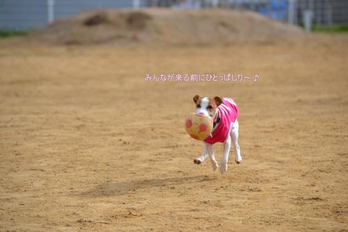 2011+12+04_柴祭り~ぷらすわん~_0002_convert_20111205213155