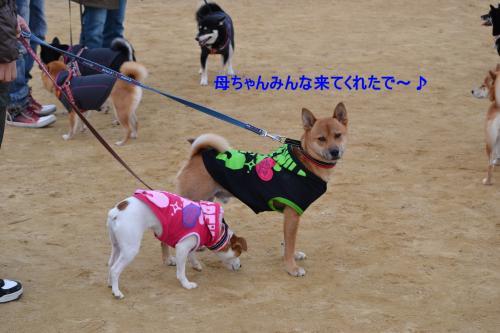 2011+12+04_柴祭り~ぷらすわん~_0027_convert_20111205215532