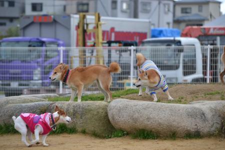 2011+12+04_柴祭り~ぷらすわん~_0055_convert_20111206213723