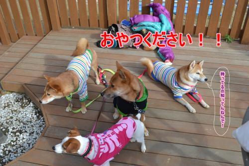 2011+12+04_柴祭り~ぷらすわん~_0230_convert_20111206221139