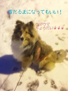2013-02-11-19-53-36_deco.jpg