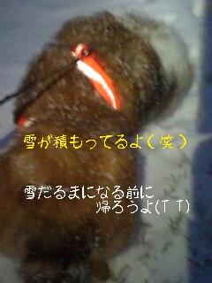2013-02-11-19-55-32_deco.jpg