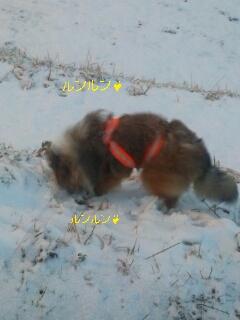 2013-02-11-19-58-58_deco.jpg