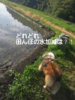2013-06-01-09-45-47_deco.jpg