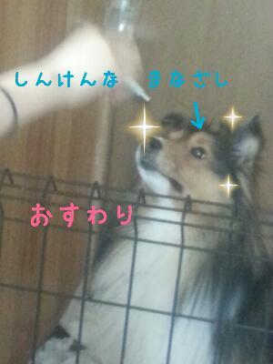2013100109184630b.jpg
