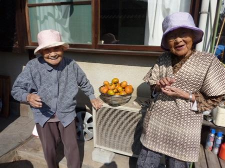 柿の収穫3