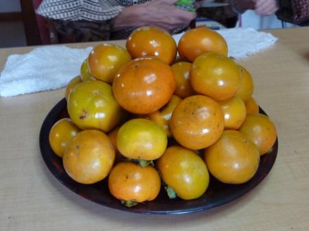 柿の収穫4