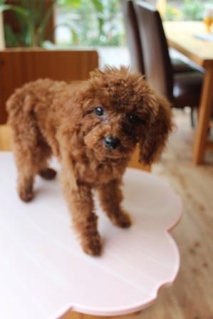 4か月の子犬