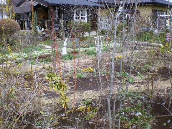 雑木庭作り10,3,21_convert_20110910150446