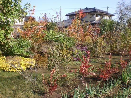 雑木庭作り10,11_convert_20110910151024