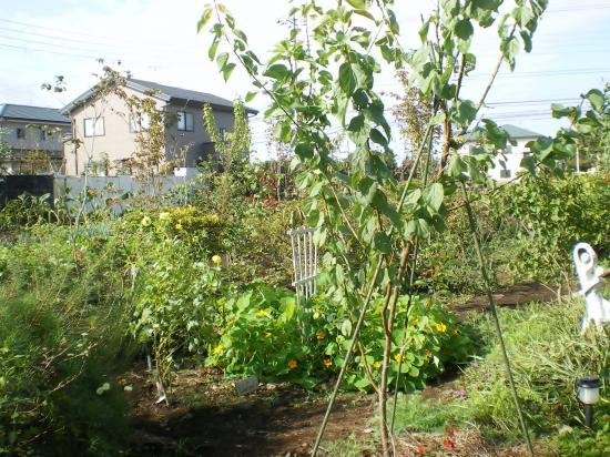 雑木庭造り9,10,10_convert_20110910150235