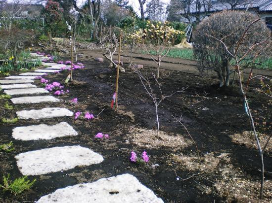 雑木庭造り前2_convert_20110910144806