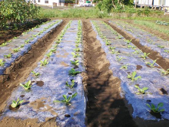 白菜畑_convert_20110919130603