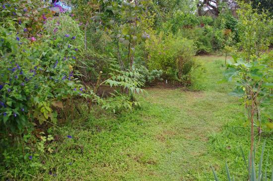 雑木庭南側2_convert_20110926202337