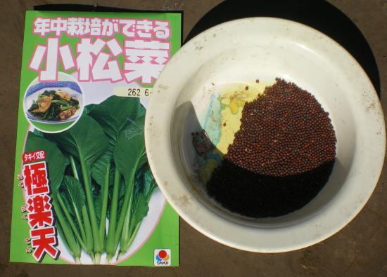 小松菜種_convert_20110929174145