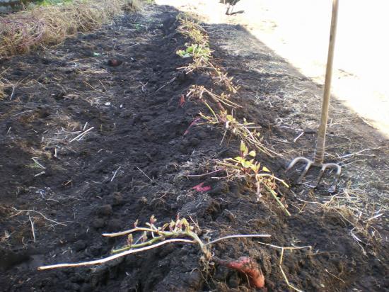 掘り起こし済_convert_20111029173320