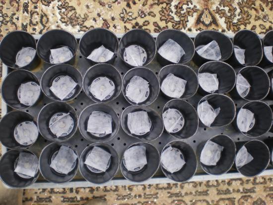 ポット準備_convert_20111118163545