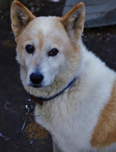 犬_convert_20111122164451