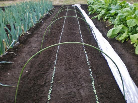 かき菜畑_convert_20111128163229