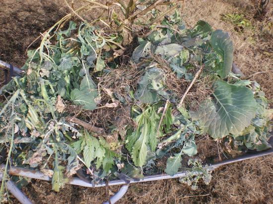 撤去野菜_convert_20120106160624