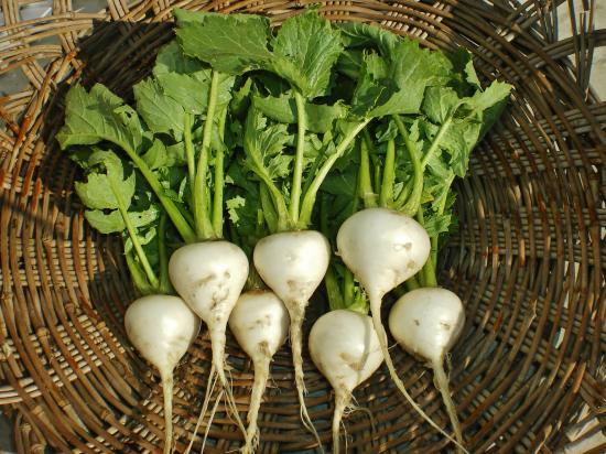 収穫カブ_convert_20120107143843