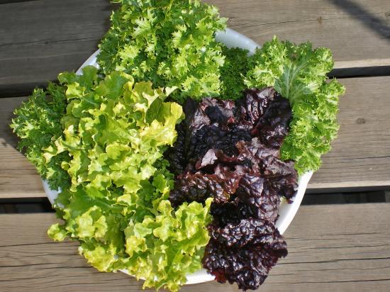 野菜収穫_convert_20120112160802