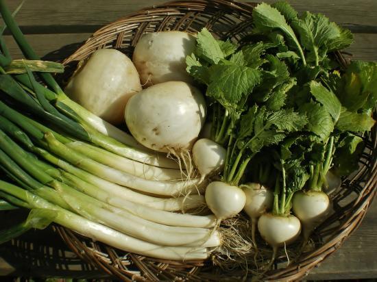 収穫ネギカブ_convert_20120130170707