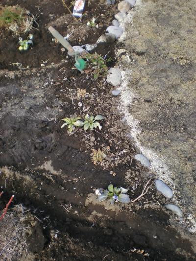 植物移植_convert_20120205173227