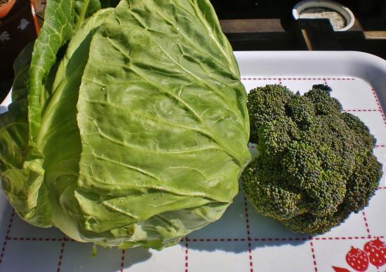 野菜収穫_convert_20120224164809