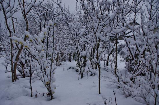 雪の雑木_convert_20120229113108