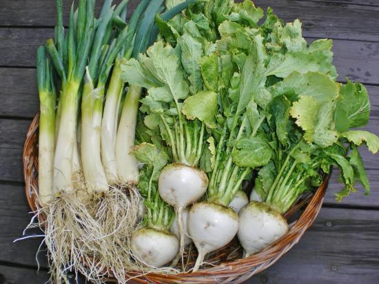 収穫野菜_convert_20120302104150