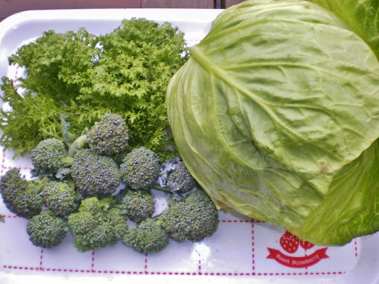 収穫野菜_convert_20120305125617