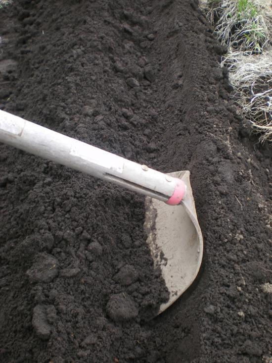 植え溝掘り_convert_20120308173705