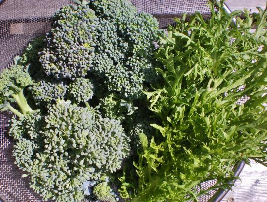 収穫野菜_convert_20120320162338