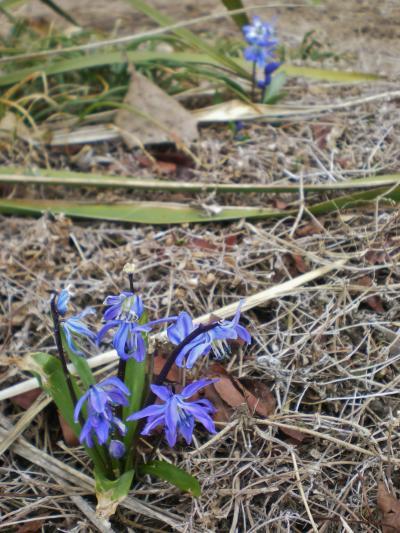 紫花2_convert_20120326170742