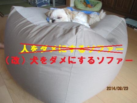 犬をダメにするソファー?