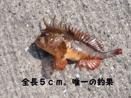 なに?この魚