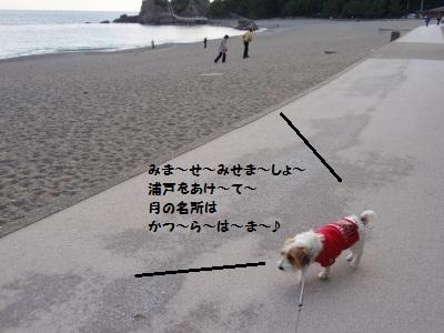 海に逃げ腰