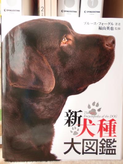ブルースフォーグル 世界犬種図鑑