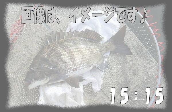 15:15 チヌ ♪