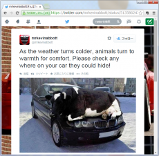 As the weather turns colder, animals turn to warmth for comfort. Please check any where on your car they could hide!