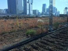 そこらじゅう地面ほじくり返されて原野みたいななってんのな。 #品川駅