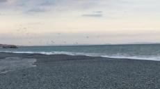 なんか鳥(鴎?)がいっぱい。何事? #海 #海photo