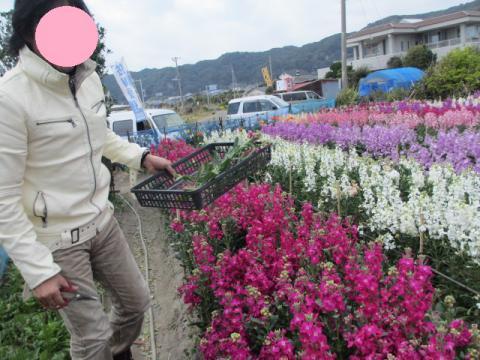 母のためにお花を切る夫