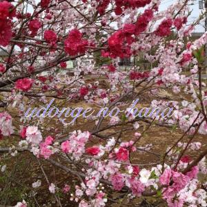 012_convert_20130402192627.jpg