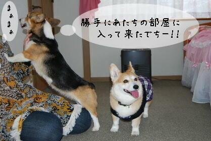 2010.2.16みかん家へ♪0009-1